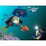 Cenefas Adhesivas Decorativas Buscando A Nemo
