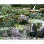 Termales De Santa Rosa De Cabal: Día De Sol A Solo $95.000=