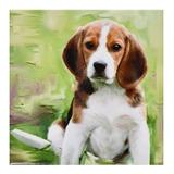 Posavasos  Perros Beagle  Cachorro Beagle