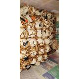Zophoba Morio Larvas X 100 Unidades