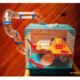 Jaula Primavera Hamster (incluye Accesorios) Envío Gratis