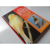 Guía Completa De Los Canarios De Color Gismondi