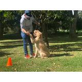 Colegio Y Guardería Campestre Canino