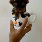 Cachorros Yorkshire Mini Hermosos