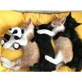 Gatos - Gatitos Hermosos Para Adopción Responsable