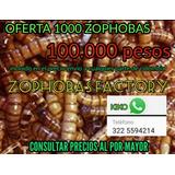 Alimento Vivo  Zophoba Morio