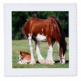 3drose Qs_80253_10 Clydesdale Yegua Y Caballo Horsequilt