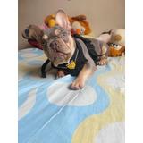 Servicio De Monta Bulldog Francés Lilac And Tan Quadcarriel