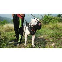 Accesorios Perros Personalizados (collares, Pecheras, Arnes)