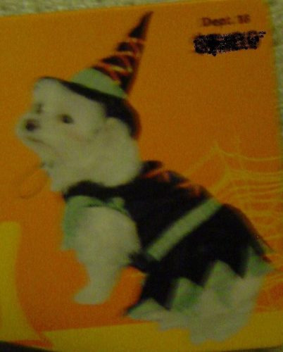 Disfraz De Bruja Talla Xs Para Mascotas: Perros & Gatos