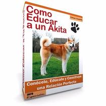 Cómo Educar A Un Akita Entrenamiento De Perros!!!