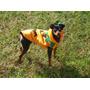 Disfraces De Calabaza Talla: S Para Mascotas: Perros & Gatos